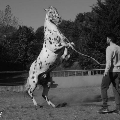 Cheval cabre