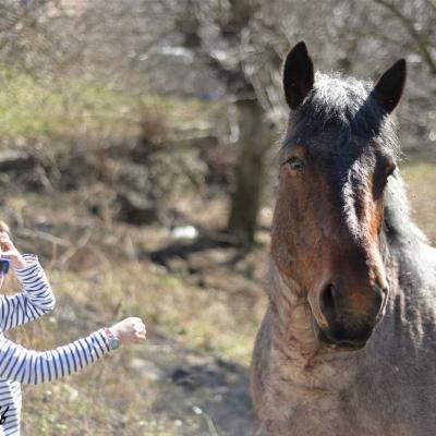 Garcon et cheval