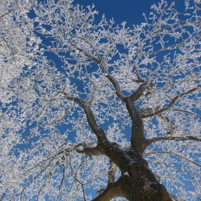 l'arbre d'hiver