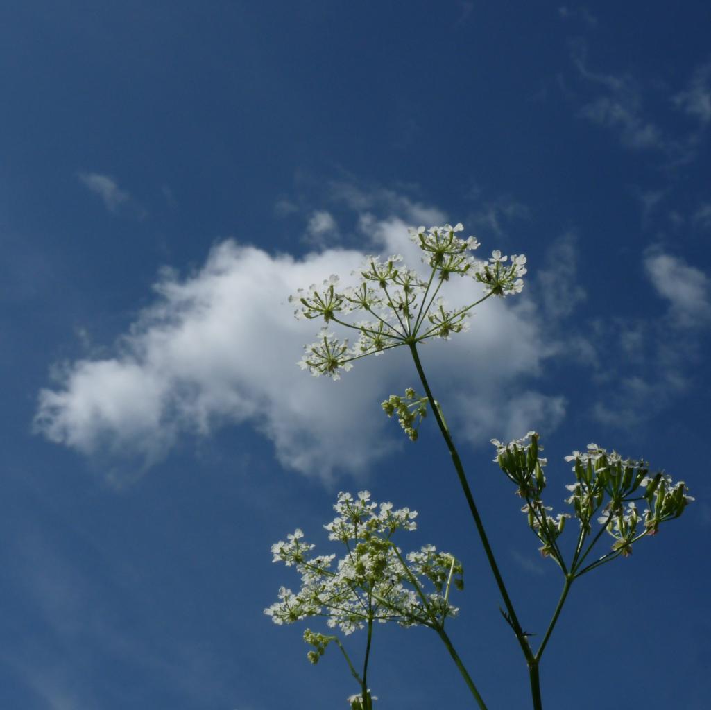 fleur de nuage
